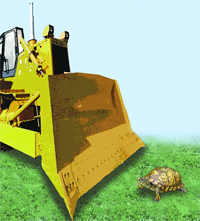 Thinking Outside the Box Turtle