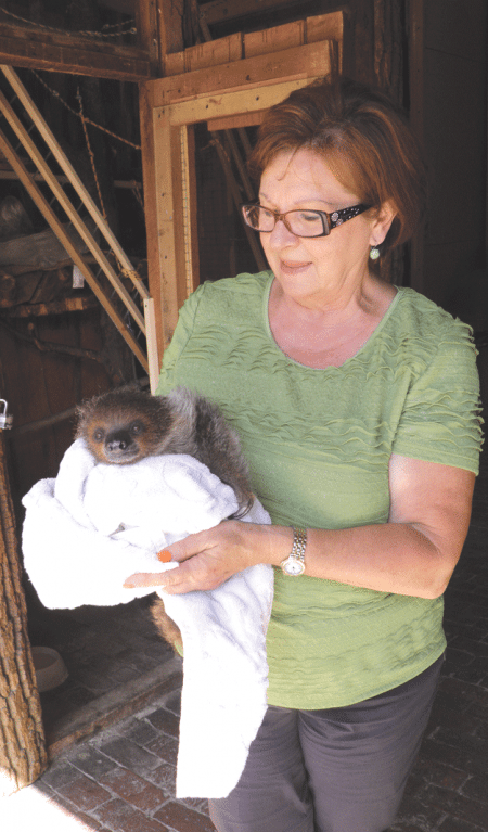 Joan Lupa shows off a baby two-toed sloth