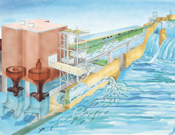 This illustration shows how the fishway