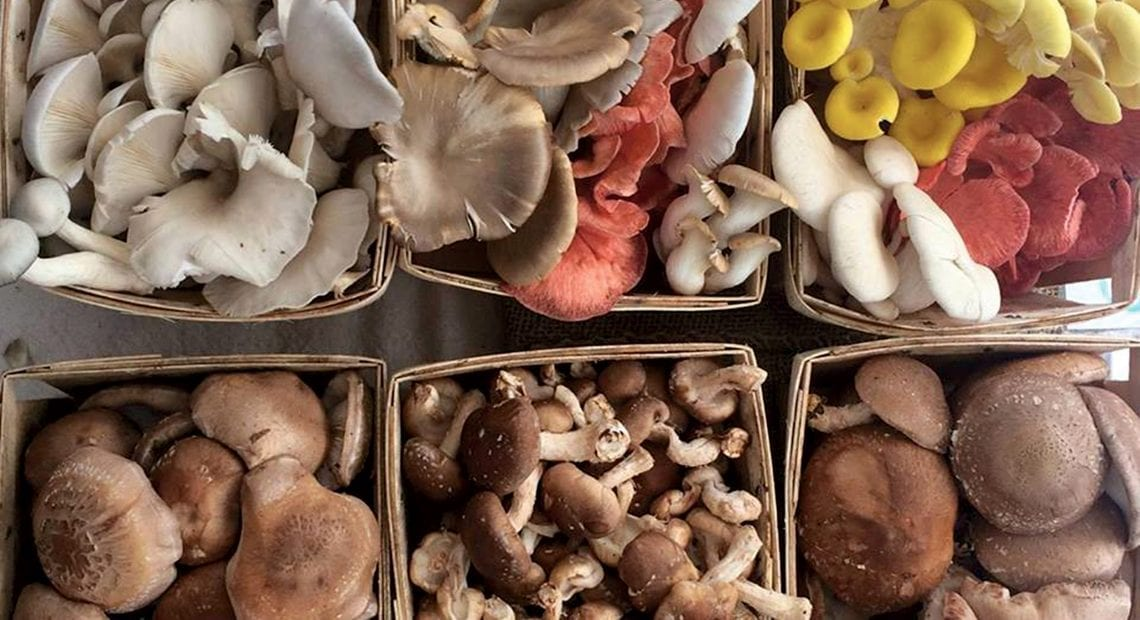 Julia Coffey brought this selection of mushrooms to a local farmers market