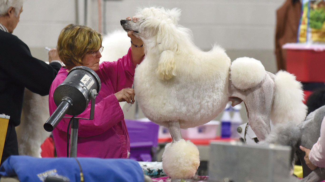 Dog shows have become a surprisingly robust source of bookings for the ESE.