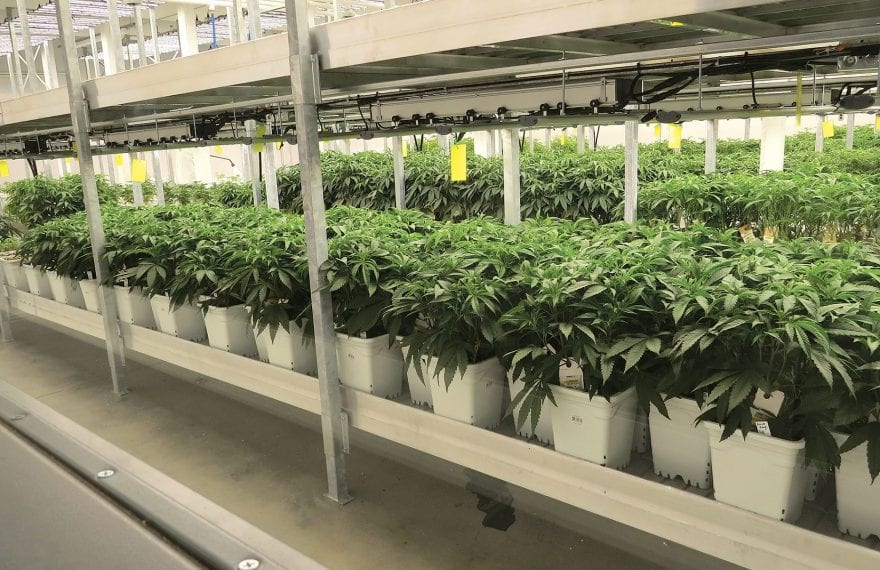 GTI's cultivation facility in Holyoke