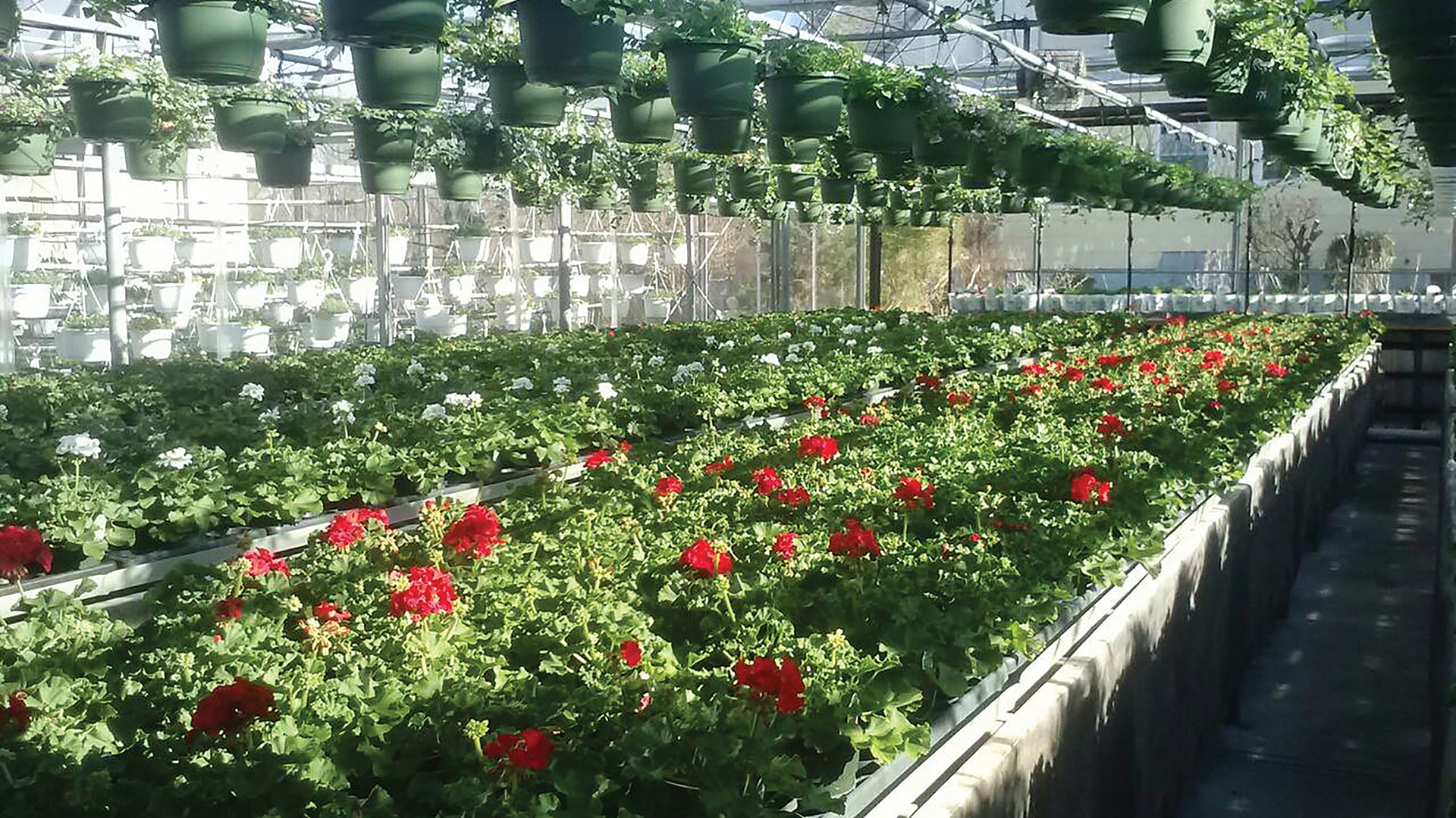 Dave Graziano says his garden center sold out of many popular plants last year.