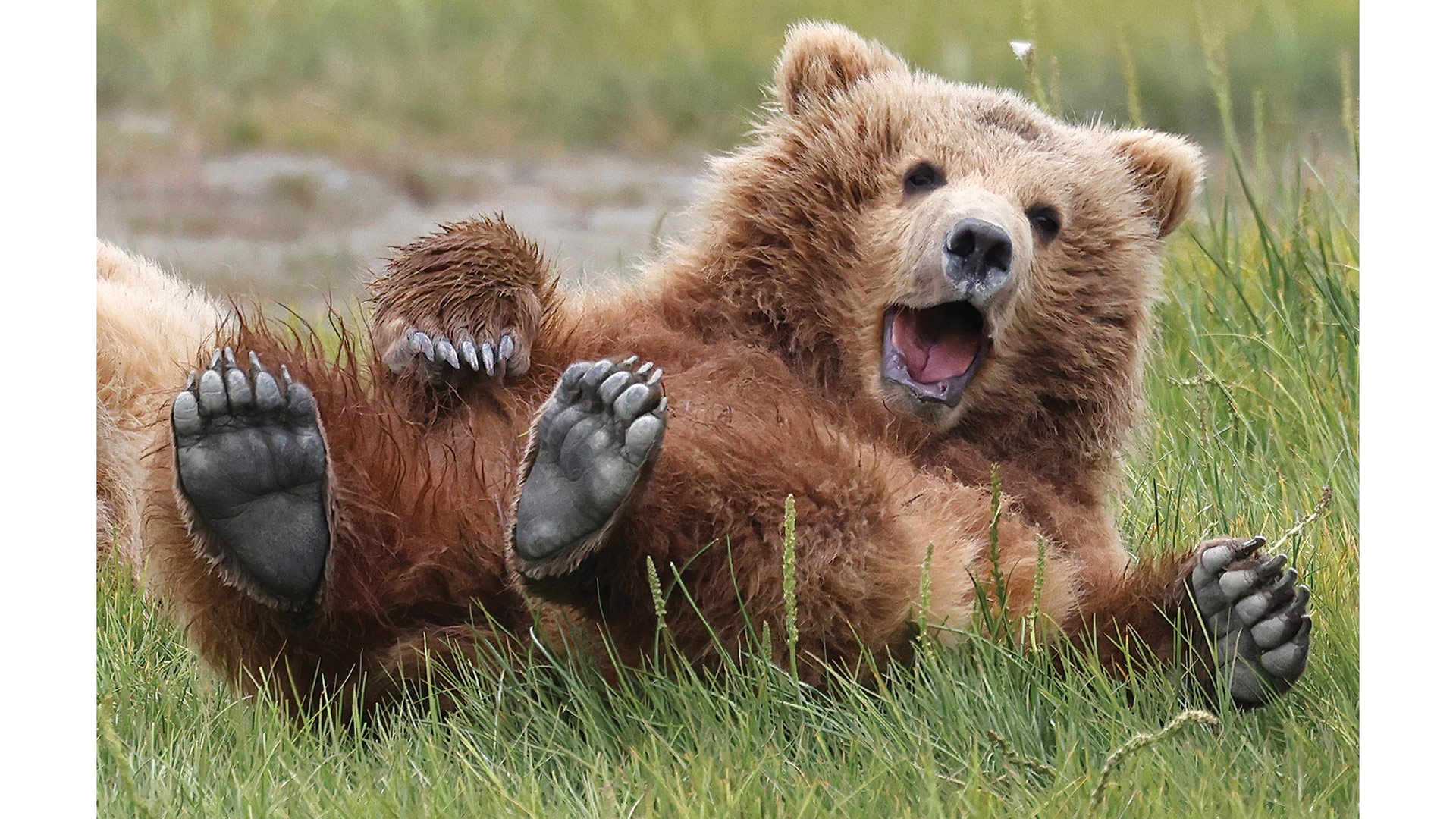 Dr. Louis DeCaro photographed this bear while visiting Alaska. The image is one of many he has sold to help families pay for needed orthotics for their children.